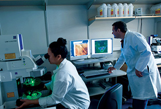 Two researchers working in a lab, female using a microscope, male comparing date on two computer screens