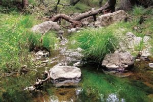 Creek in Los Angeles, with grassy banks, rocks in the water, and fallen tree limbs