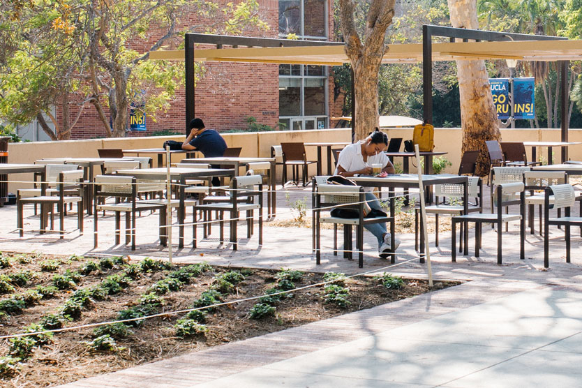 Rows of green plants grow in the foreground while students study at outdoor tables in the background.